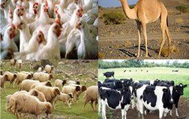 الزراعة تصدر 6 نصائح هامة للمربين حفاظا على الثروة الحيوانية والداجنة من الارتفاعات الحادة في درجات الحرارة