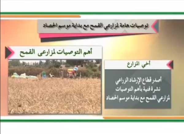 وزارة الزراعة: إرشادات هامة لمزارعى القمح يجب اتباعها مع بداية موسم الحصاد